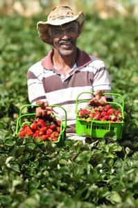 Seu Ovídio: desde 2006 mantém espaço para a produção de morango na propriedade dele (Ed Alves/CB/D.A Press)