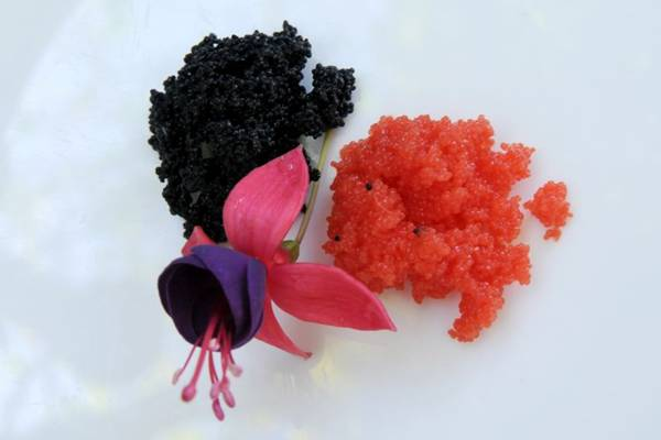 Caviar preto e vermelho: preciosidade gastron�mica oferecida em restaurantes da cidade  ( Carlos Vieira/CB/D.A Press)