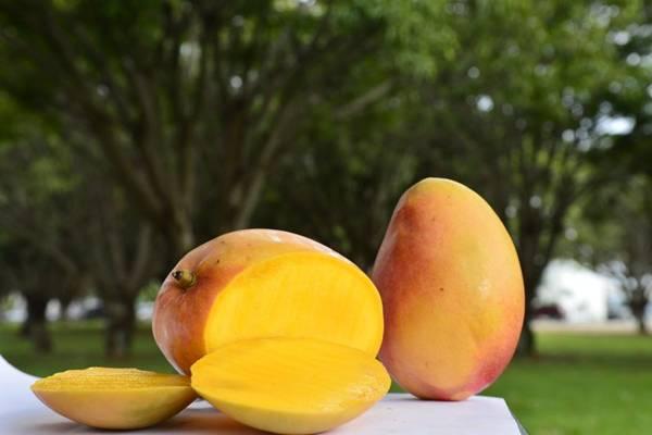 A fruta está marcando presença nas árvores da cidade ( Daniel Ferreira/CB)