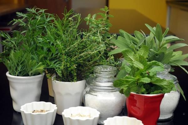 As ervas são ótimas substitutas do sal. Quem quer reduzir o consumo de sódio tem várias alternativas, como manjericão, salsinha, tomilho e alecrim (Antonio Cunha/CB/D.A Press)