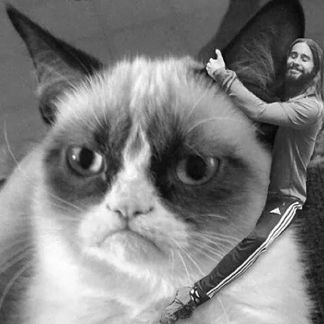 Encontro dos memes. Jared Leto abraça o famoso Grumpy Cat, que pelo visto não parece gostar muito de contato humano (Reprodução)
