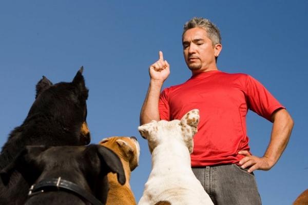 Apresentador do programa O encantador de cães, Cesar Millan.  (Animal Planet/Divulgação)