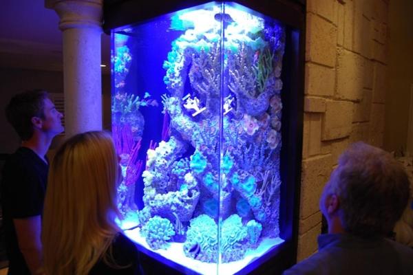 Se engana quem pensa que não há programas sobre peixes: Os reis do aquário mostra diversas espécies  (Nat Geo Wild/Divulgação)