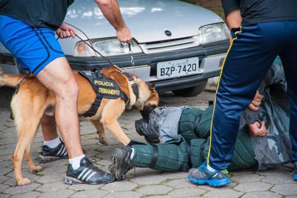 Os cães são treinados no canil central da Polícia Militar de São Paulo  (Discovery Channel/Divulgação)