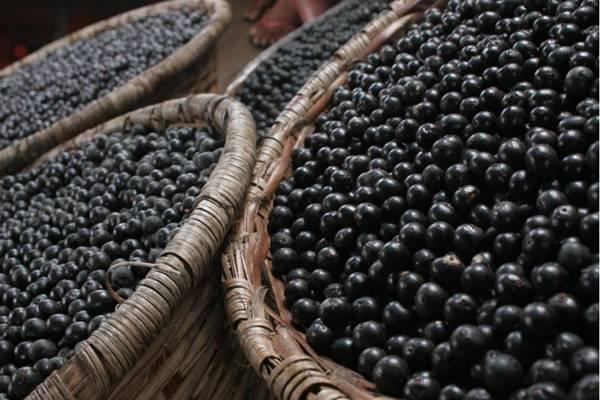 O açaí é usado em receitas típicas do Pará (Monique Renne/CB/D.A Press)