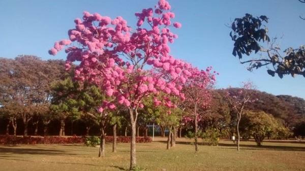 Festival das Flores acontecerá no Parque da Cidade  (Laura Ribeiro de Sousa Souto/Divulgação)