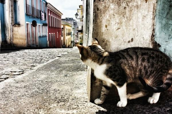 O projeto reúne mais de cinco mil imagens (Rodrigo Morais/Divulgação)