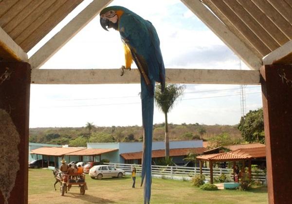 Araras Hotel-Fazenda (Edilson Rodrigues/CB/D.A Press)