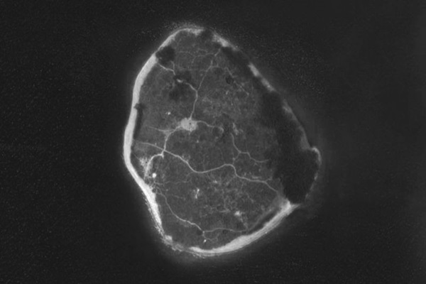 Projeto do Vaga-mundo é resultado de uma expedição à Ilha do Retiro (Reprodução)