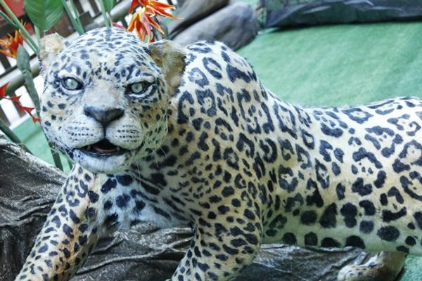 Fotos, réplicas e vídeos de animais compõem a mostra  (Divulgação )