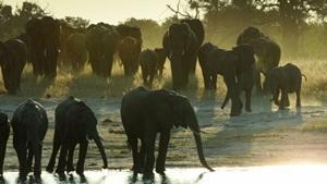 Imagens estonteantes emolduram documentário sobre a vida selvagem (Animal Planet/Divulgação)