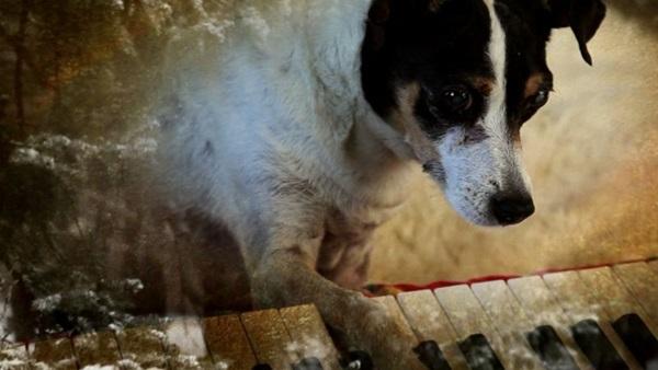 A morte de Lollabelle é mote para o documentário 'Coração de cachorro' (Reprodução/Internet)
