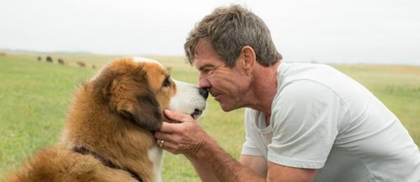 O cachorro Bailey reencarna quatro vezes em busca do primeiro dono (Universal/Divulgação)